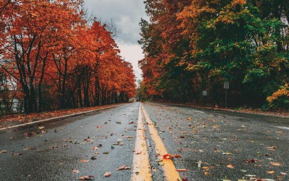 道路两旁的树木秋日风光