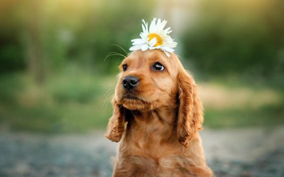 狗狗的神仙颜值