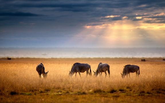 非洲大地上的美丽生灵