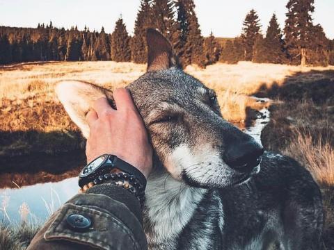 带着狗子去旅行