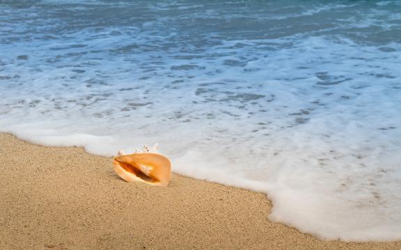 沙滩上的海螺
