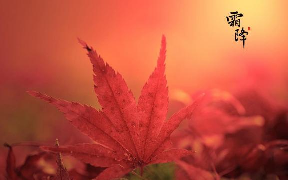 霜降赏红叶