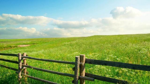 绿色护眼唯美草原风光