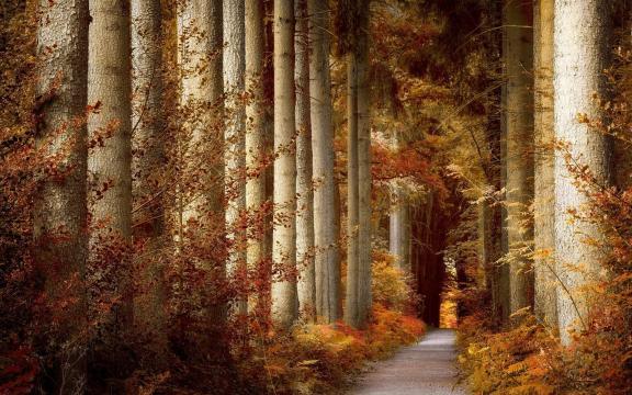 秋季森林小道美景