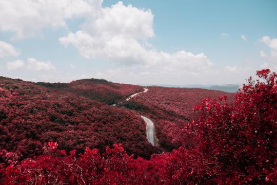 最美的秋天红叶