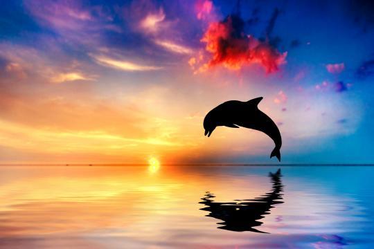 海是海豚的呼吸