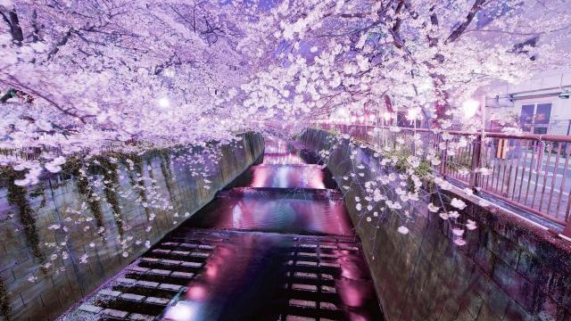 迷路在东京