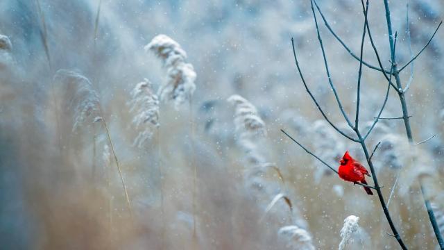冰天雪地里的唯美风光