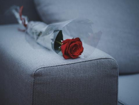 艳丽的红玫瑰花