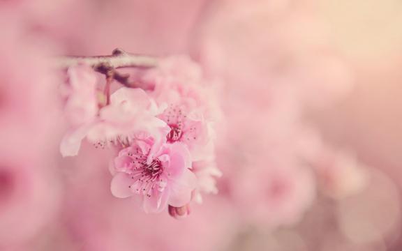浪漫又唯美的樱花梦幻世界