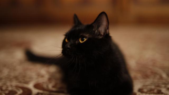 玄幻片《猫妖传》