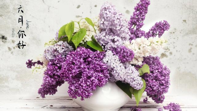 你好,六月的花朵