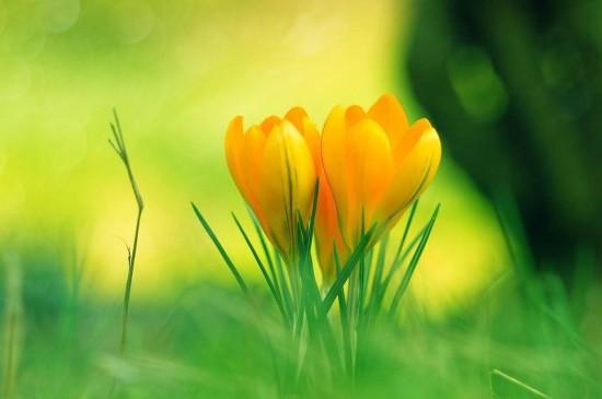 小清新花开朵朵