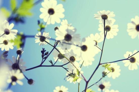 绽放的清新花儿