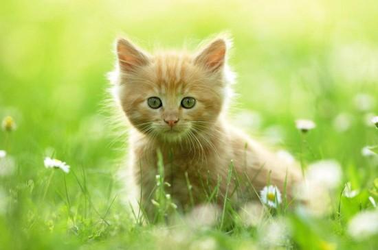 呆萌可爱猫咪