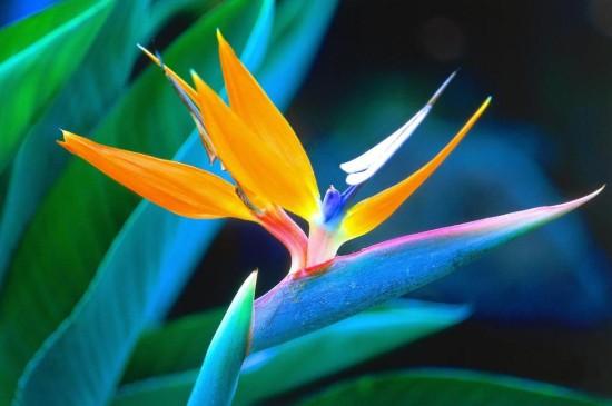 春天清新植物摄影