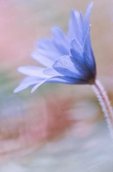 清新春日花朵