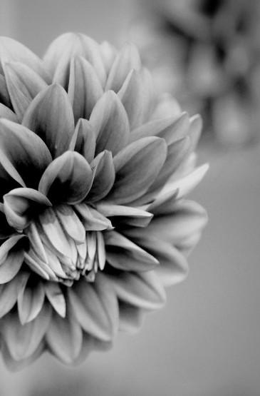 花卉植物黑白系