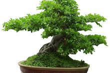 好看的盆景盆栽