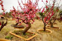 盆栽植物艺术美图
