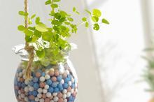 室内小型盆栽植物图
