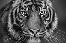 超写实动物素描