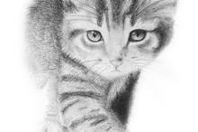 动物猫素描