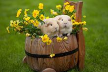 萌萌小兔子