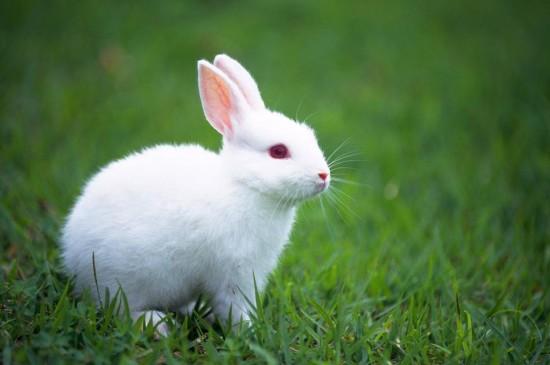 可爱又温顺的兔子