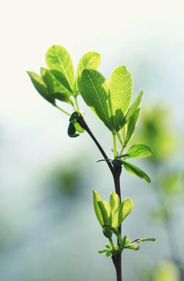 绿色小清新植物