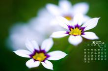 2015年3月养眼花卉日历