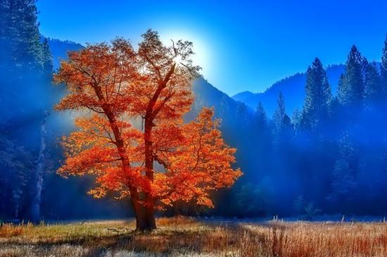 唯美森林自然