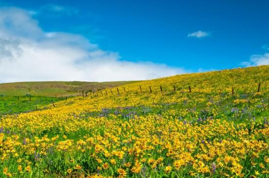 自然绿色草原风景壁纸