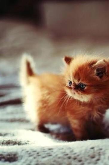 憨态可掬的小猫咪萌手机壁纸
