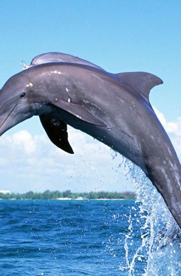 跳跃的海豚高清可爱手机壁纸