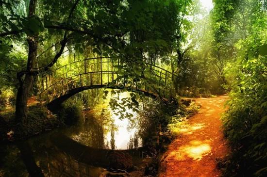 梦幻森林自然风景壁纸