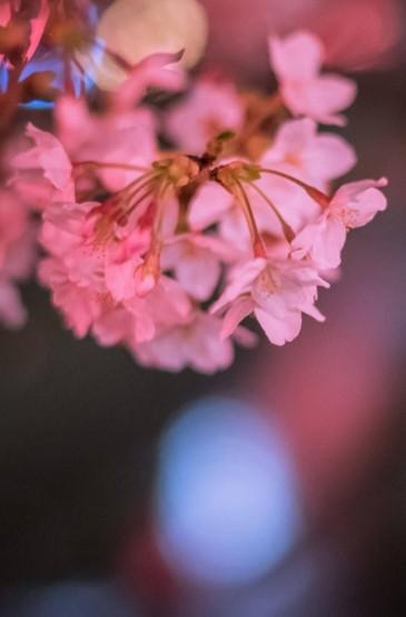 唯美粉色花瓣