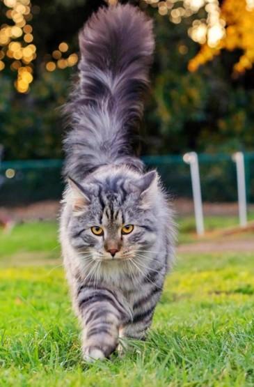 超级呆萌可爱的小猫咪户外写真