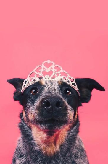 戴着皇冠的狗狗
