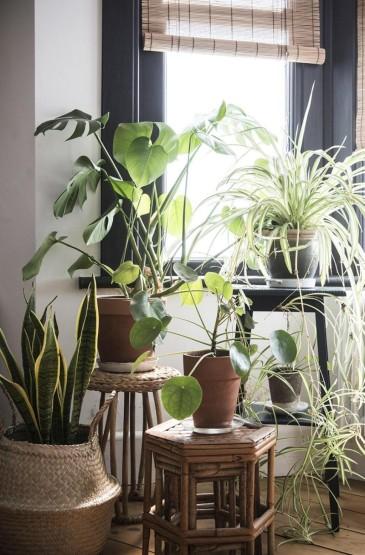 养眼家居室内植物