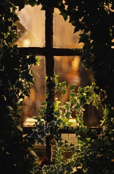 唯美的窗户