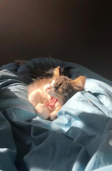 淘气可爱活泼小猫咪