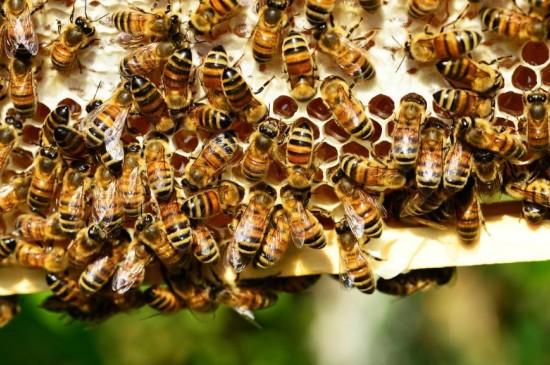 密集的蜜蜂蜂巢图片