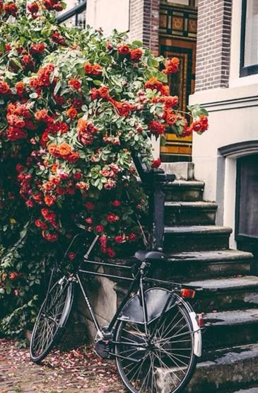 房前屋后的浪漫