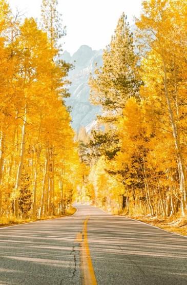 唯美迷人的秋天风光图片