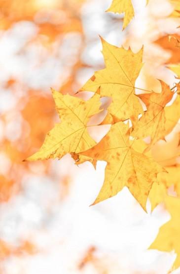 秋季树木清新养眼摄影