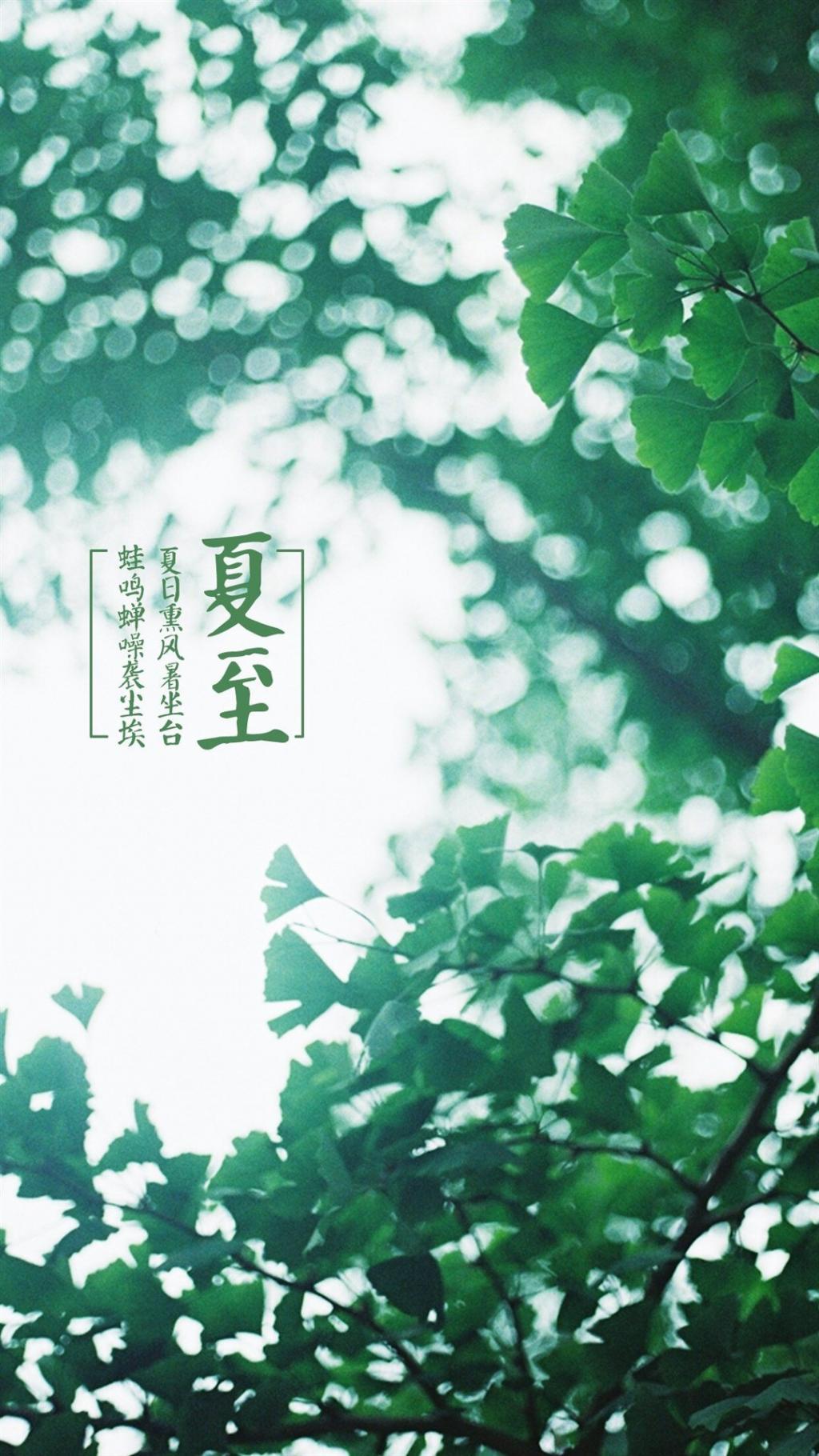 夏至节气绿色植物