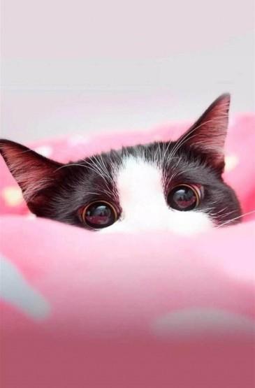 粉色少女心