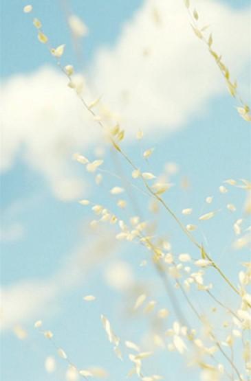 淡蓝忧郁的盛夏