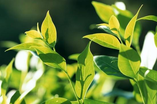 青翠欲滴的绿叶